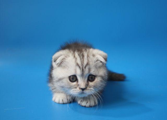 котята смотреть фото
